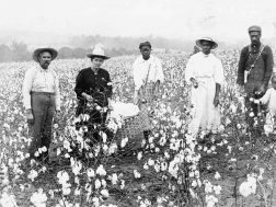 Cotton picking at the O'bannon farm near Menlo early 1900s